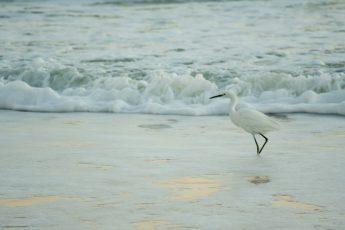 Ocean shore with bird in water.