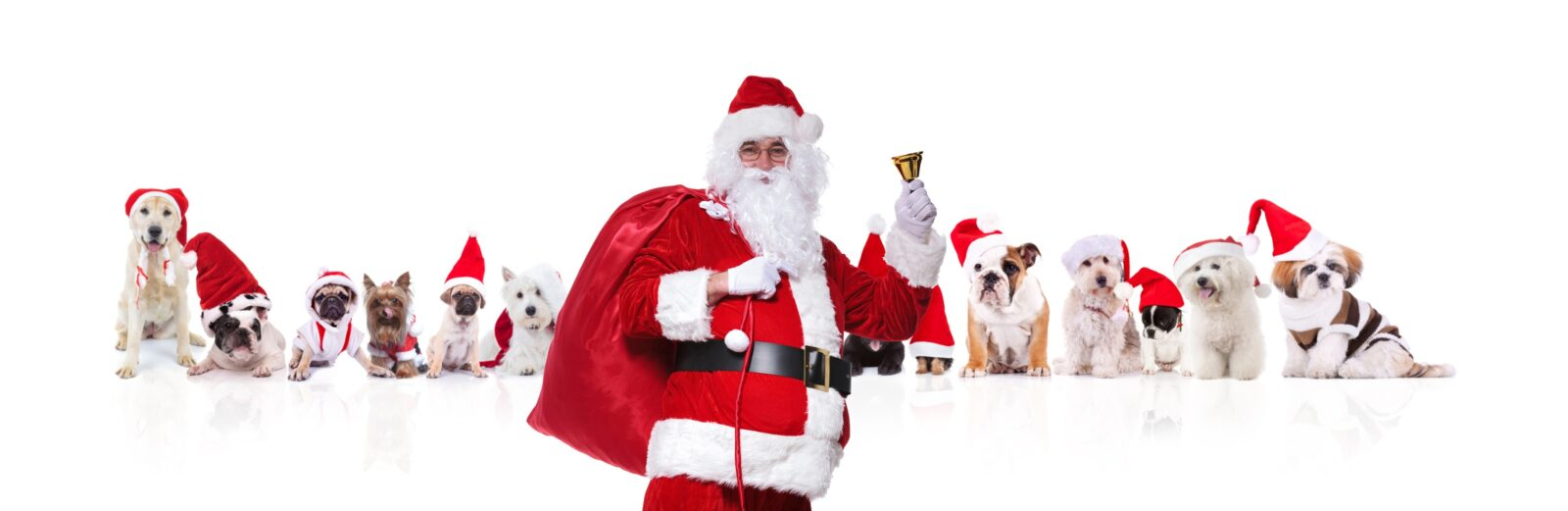 Santa , Bag of Toys, Dogs wearing Santa hats, Cats wearing Santa hats, Santa Suit, Bell