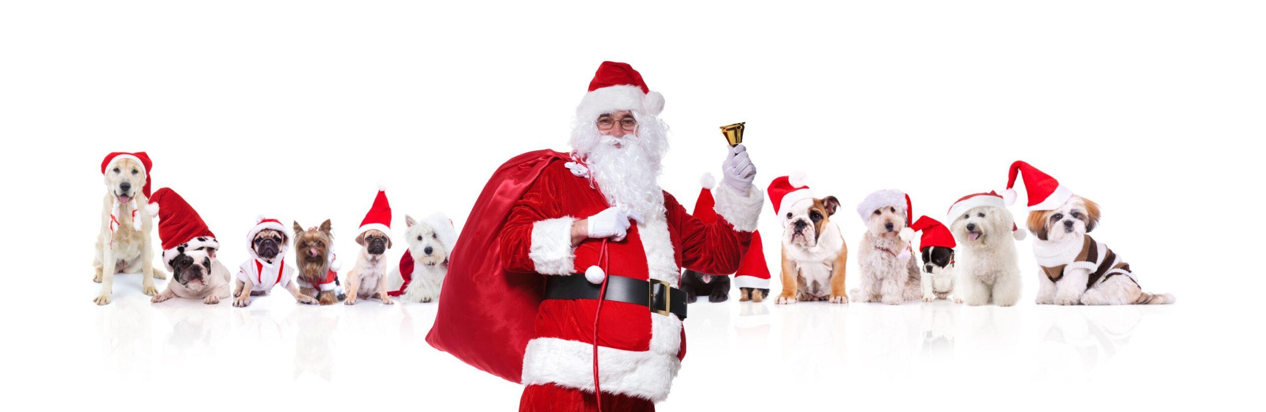 Santa , Bag of Toys, Dogs wearing Santa hats, Cats wearing Santa hats, Santa Suit, Bell